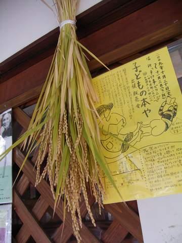 20091019kuwano_inekari2.JPG