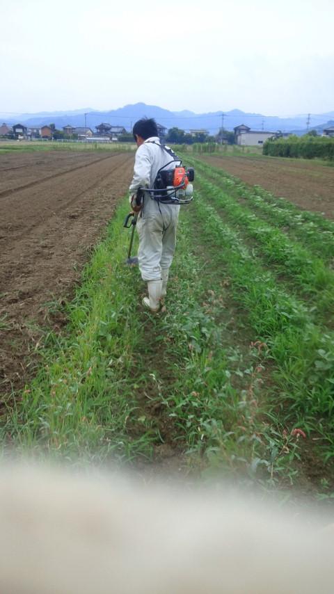いとーさんがきってさるいて、ツルヒサがひろうてさるく。枝豆の収穫なう。
